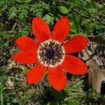 thumb_fleur_rouge_petales_300
