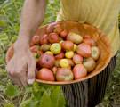 bio_pommes