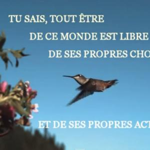 video_le_pouvoir_de_choisir